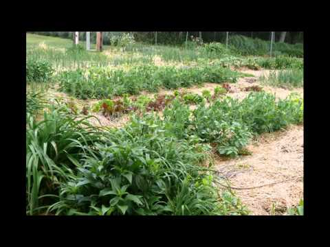 Organic Gardening Tips That Are Fun And Easy; Home Vegetable Garden Plans