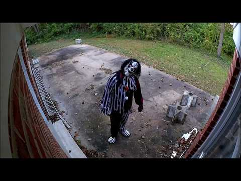 Napadi Pasa Na Klovnove Ubice