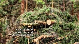 Dokumentation Hackschnitzelproduktion - vom Wald bis ins Heiz(-kraft)werk