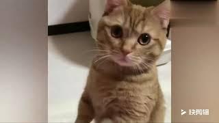 这可能是最没底气的猫主子,见人就作揖,快点给些小鱼干吧 thumbnail