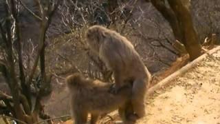 funky monkey sex