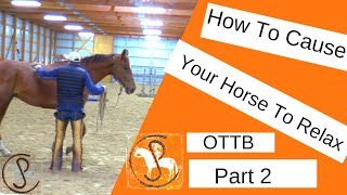 Tips For Grooming The Nervous And Sensitive Horse... Teach Your horse To Calm Down And Relax...