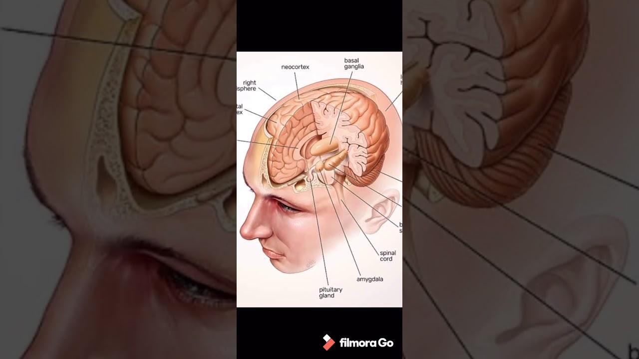 માનવ મગજ (class-10 : lesson7: Human brain) - YouTube