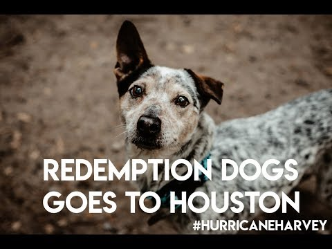 Redemption Dogs Goes To Houston GoFundMe