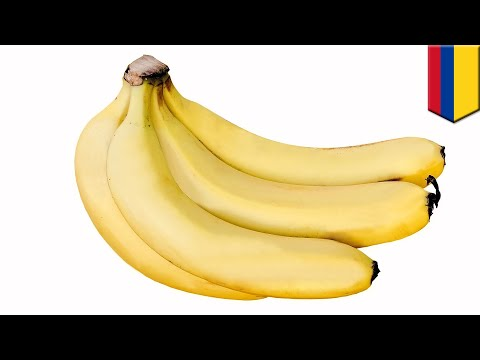 Fungus wiping out world's banana plants reaches the Americas - TomoNews