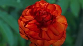Величественная природа / Majestic Nature(4) - Цветы / Flowers