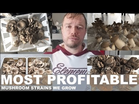 These Are My Most Profitable Mushroom Mycelium Strains That