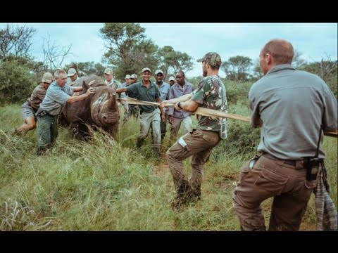 THE RETURN OF RHINOS TO RWANDA