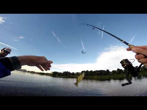 Potomac River - Ultra Shallow Water Summer Bass Fishing