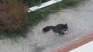 Кот возвращается домой