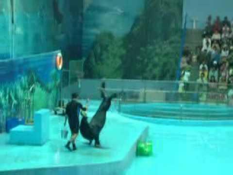 xiếc sư tử biển ở Suối Tiên 5/2/2011