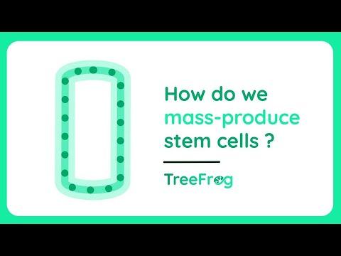 How do we mass-produce stem cells ?