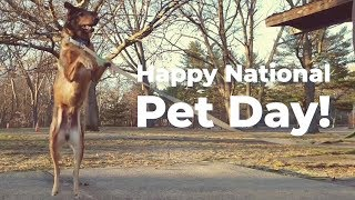 Happy National Pet Day From PFX!