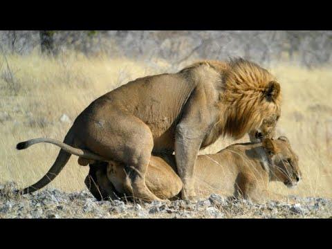 mating animals compilation