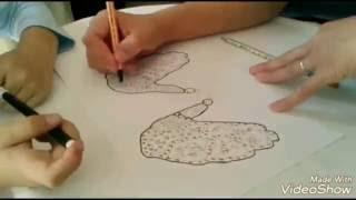 Simple kids drawings: butterflies | Desenhos simples para crianças: Borboletas