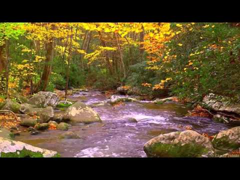 download calming forest picture - photo #37