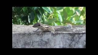 Naughty Squirrel Doing Masti