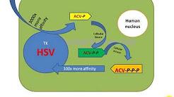 Mechanism of Acyclovir   (Brand: Acerux_ Bangladesh)