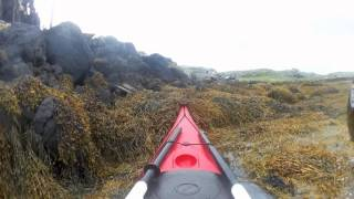 Sea Kayakers resuce a  trapped dolphin on the Isle of Barra