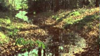 Midlake - Rulers, Ruling All Things (official video)