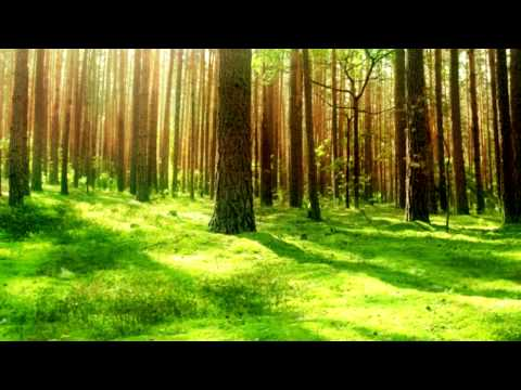Relaxing Celtic Music | Irish Forests | Relax, Sleep, Study, Meditation