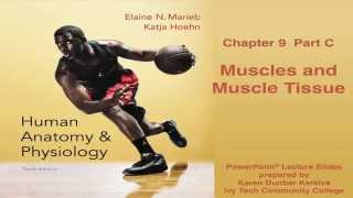 Anatomy and Physiology Chapter 9 Part C Lecture: Muscle and Muscle Tissue