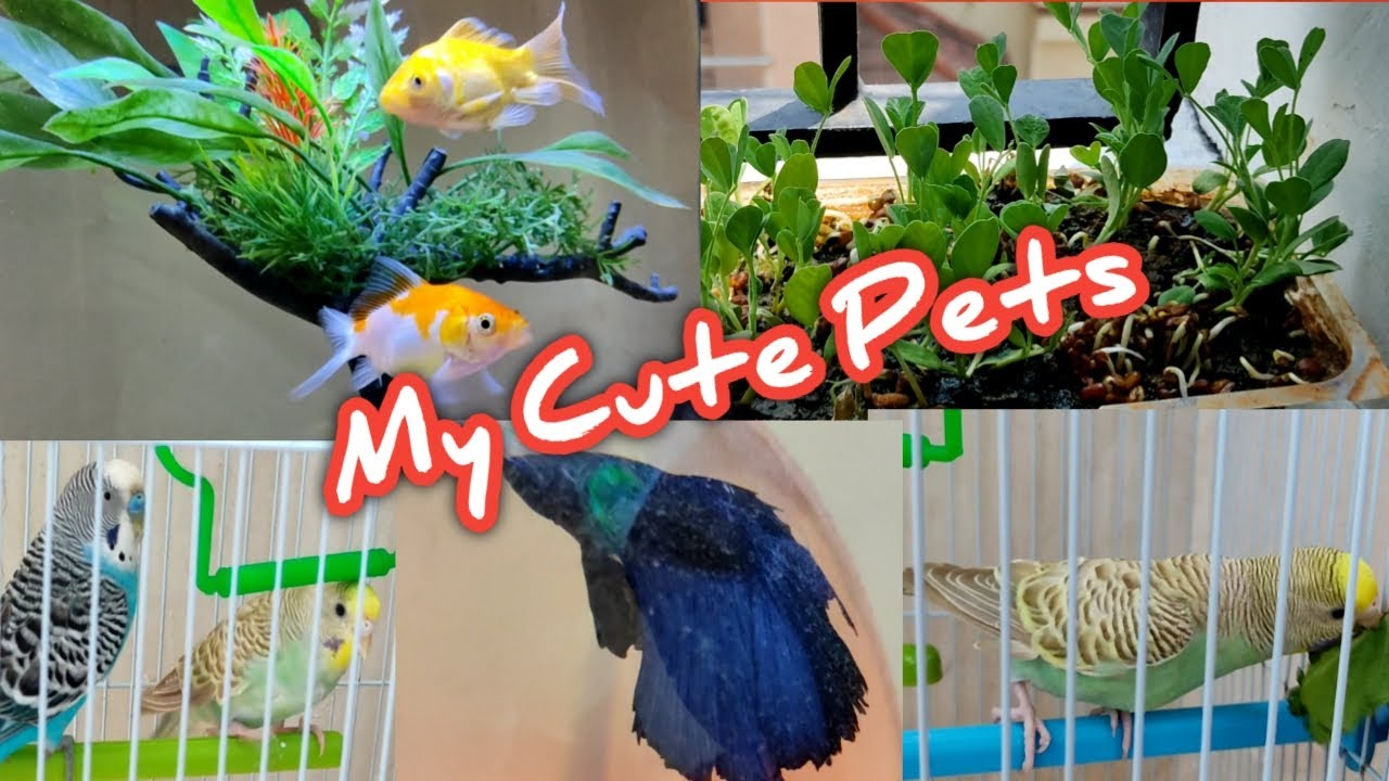 My Pets//How to clean birds cage// Birds, Fish Foods//Superb time pass//Happy Pets