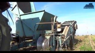 Kopanie ziemniaków 2015 | MF 255 & Bolko Z643