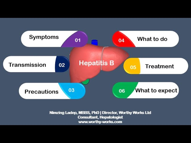 Hepatitis B infection | from transmission to treatment
