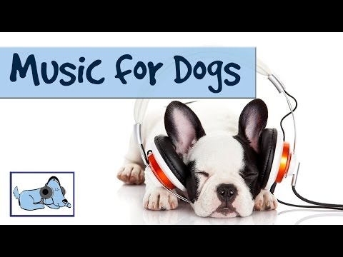 music-for-dogs---relaxing-music-designed-to-help-dogs-through-anxiety-issues