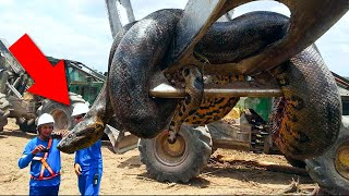 10 Real Life Giant Creatures