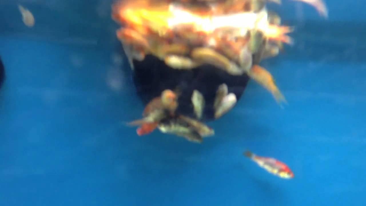 Fish in tank died - Wal Mart Fish Tank Full Of Dead Fish
