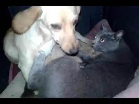Cat and Dog share puppies:Kittens