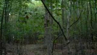Bruja en el Bosque ... (real)