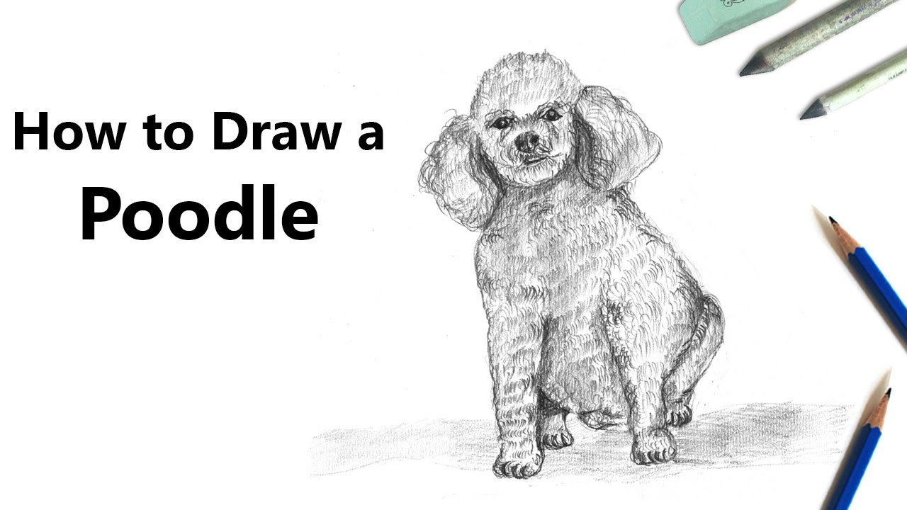 How To Draw A Poodle Dog With Pencils