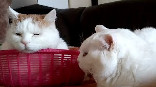かご猫Blog https://kagonekoshiro.com のせ猫オフィシャルブログ http:...