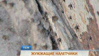 Ковер из насекомых. Мухи оккупировали пермскую пятиэтажку