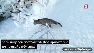 whiskas праздничный микс новогодняя 2019 реклама