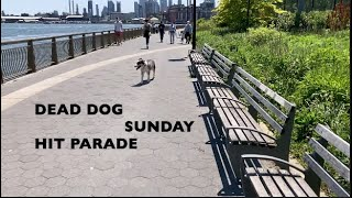 My World - Dead Dog Sunday Hit Parade