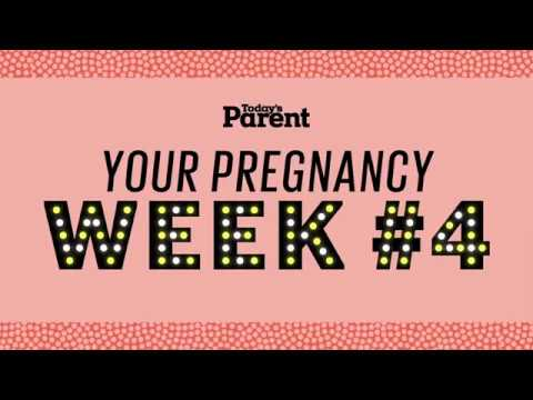 Your pregnancy: 1-4 weeks