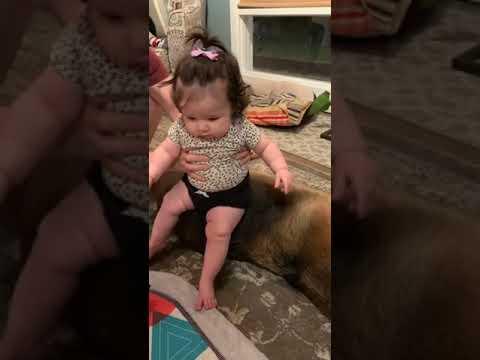 Dog and Baby on dog crime!  No dogs hurt!