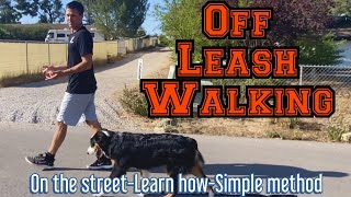 Learn the simple process to walk off leash with distractions