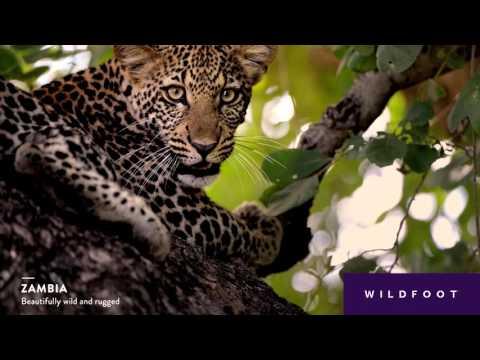 Wildfoot Zambia