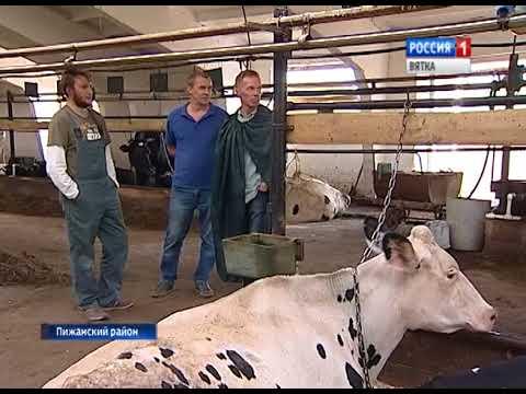 В Пижанском районе на ферме вместе с людьми трудится робот(ГТРК Вятка)