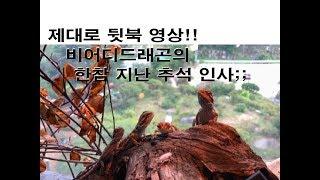 제대로 뒷북영상!! 원주 파충류샵  비어디드래곤의 추석…
