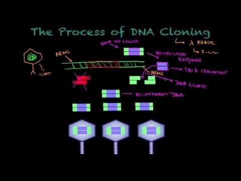 DNA Cloning - Biology tutorial