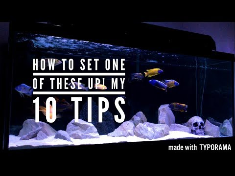 AFRICAN CICHLIDS- HOW TO SET UP A TANK & KEEP THEM HEALTHY | 10 TIPS