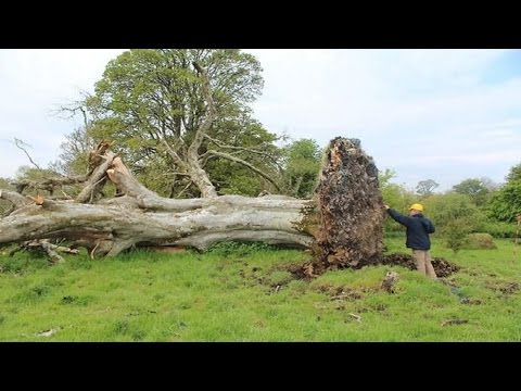 Medieval skeleton tangled in tree roots unearthed in storm from YouTube · Duration:  2 minutes 10 seconds