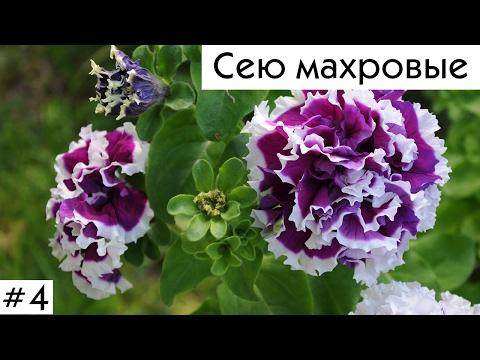 Петунии 2017: посев махровых!