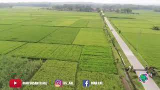 Download lagu DJ BEBEK GALAU  Lagu Tik Tok Terbaru Rahmat Tahalu 2019